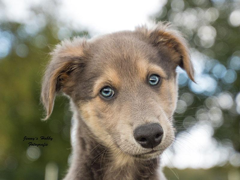 Hund im Fokus Welpe