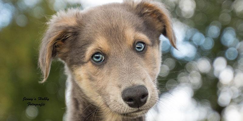 Hund im Fokus Welpenschule