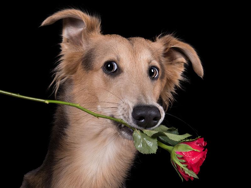Hund im Fokus Einzeltraining