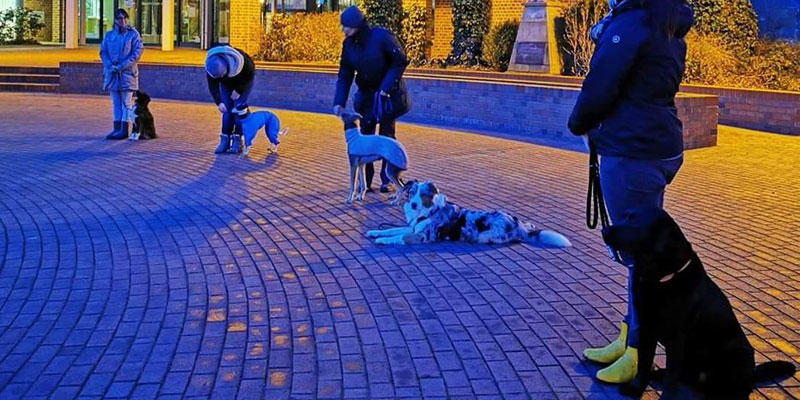 Hund im Fokus Familienhund