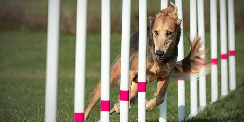 Hund im Fokus Agility&Fun-Agility