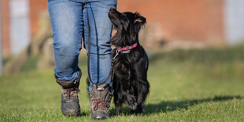 Hund im Fokus Unterordnung